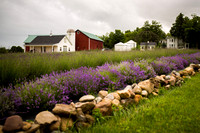 Lockwood Lavender Farm-18